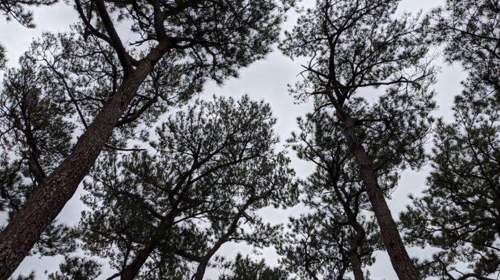 沖縄の冬はなぜ「内地や北海道よりも寒い」? 5つの理由と防寒対策